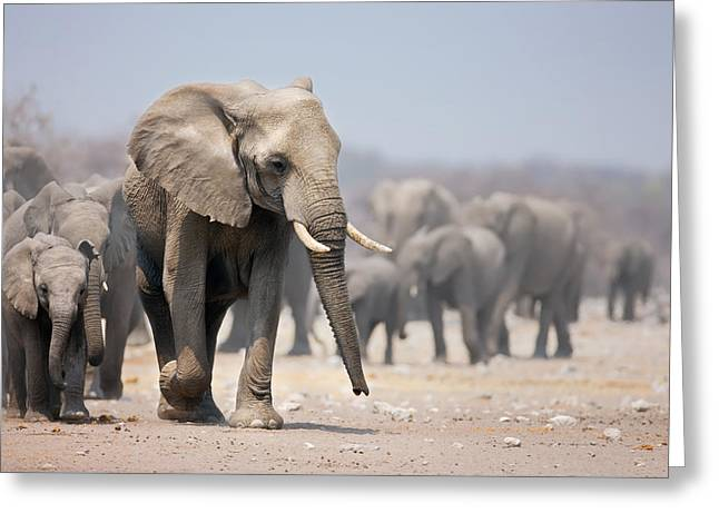 African Elephants Greeting Cards - Elephant feet Greeting Card by Johan Swanepoel