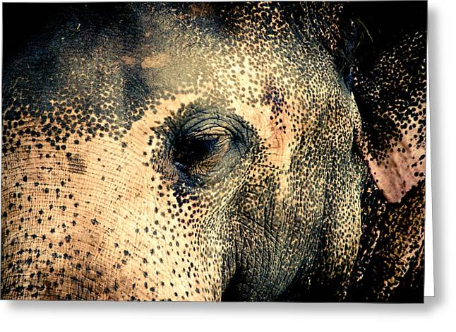 Elephants Pyrography Greeting Cards - Elephant Greeting Card by Hemantha Fernando