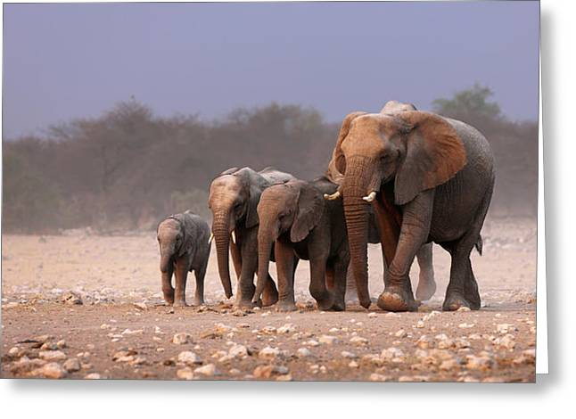 Reserve Greeting Cards - Elephant herd Greeting Card by Johan Swanepoel