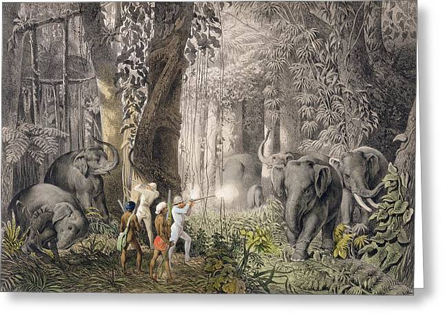 Bengal Drawings Greeting Cards - Elephant Hunt In The Region Of Logalla Greeting Card by Graf Emanuel Andrasy