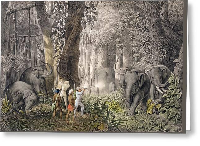 Elephant Hunt In The Region Of Logalla Greeting Card by Graf Emanuel Andrasy