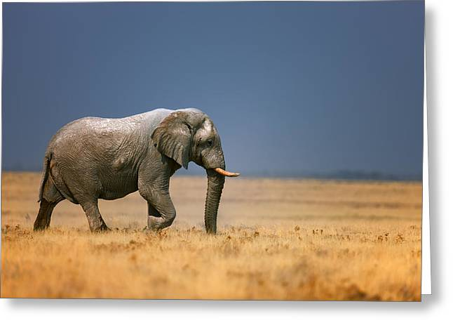 Open Photographs Greeting Cards - Elephant in grassfield Greeting Card by Johan Swanepoel