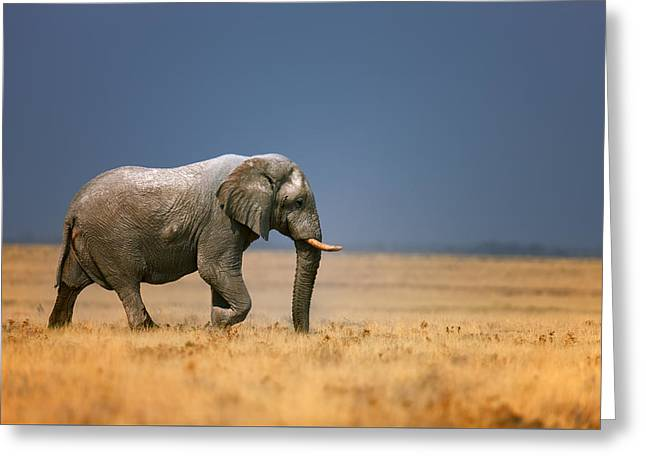 African Elephants Greeting Cards - Elephant in grassfield Greeting Card by Johan Swanepoel