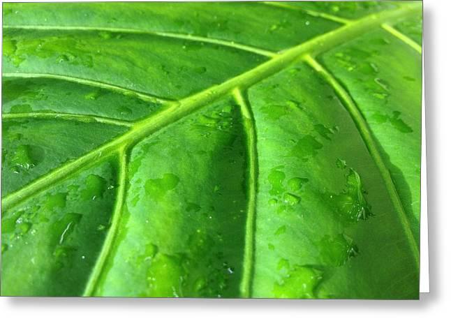 Bamboo House Greeting Cards - Elephant leaf 2 Greeting Card by Jonathon Hernandez
