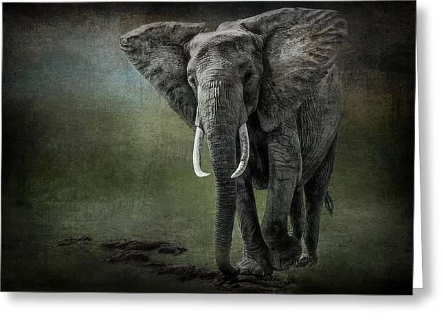 Nature Photographers Greeting Cards - Elephant On The Rocks Greeting Card by Mike Gaudaur