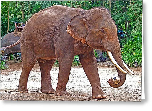 Basketballs Greeting Cards - Elephant Playing Soccer in Mae Taeng Elephant Park near Chiang Mai-Thailand Greeting Card by Ruth Hager
