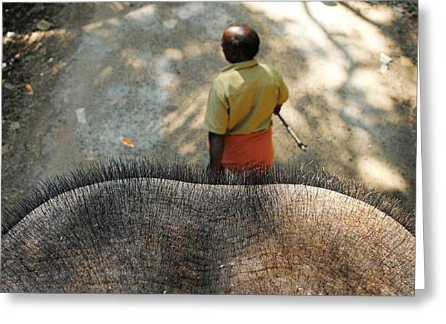 Money Sharma Greeting Cards - Elephant Ride Greeting Card by Money Sharma