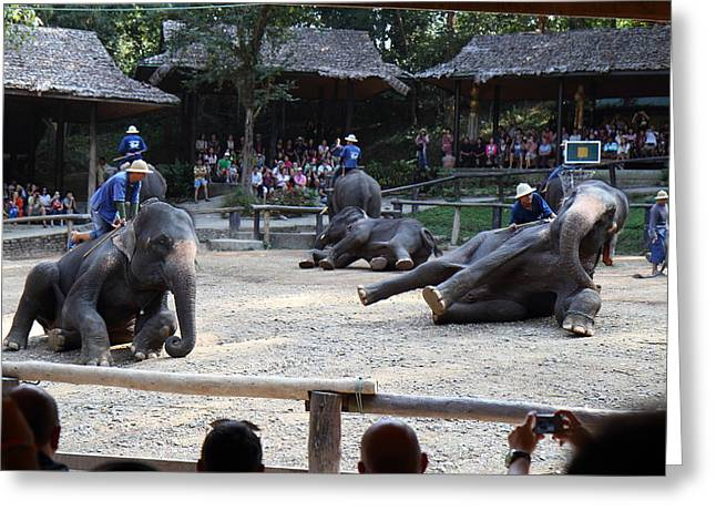 Show Greeting Cards - Elephant Show - Maesa Elephant Camp - Chiang Mai Thailand - 011315 Greeting Card by DC Photographer