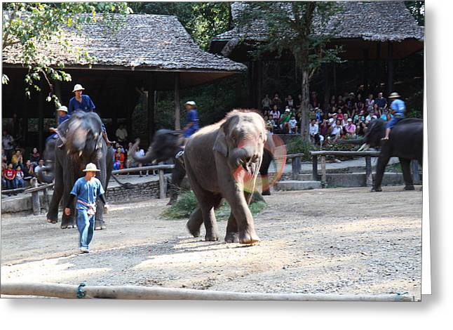 Elephant Photographs Greeting Cards - Elephant Show - Maesa Elephant Camp - Chiang Mai Thailand - 011317 Greeting Card by DC Photographer