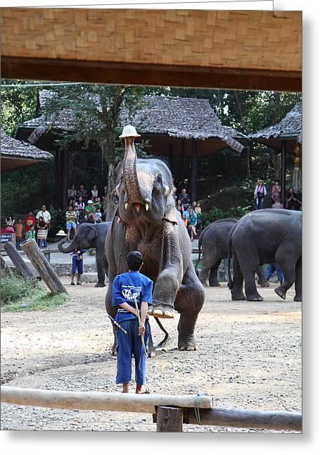 Elephant Show - Maesa Elephant Camp - Chiang Mai Thailand - 011322 Greeting Card by DC Photographer