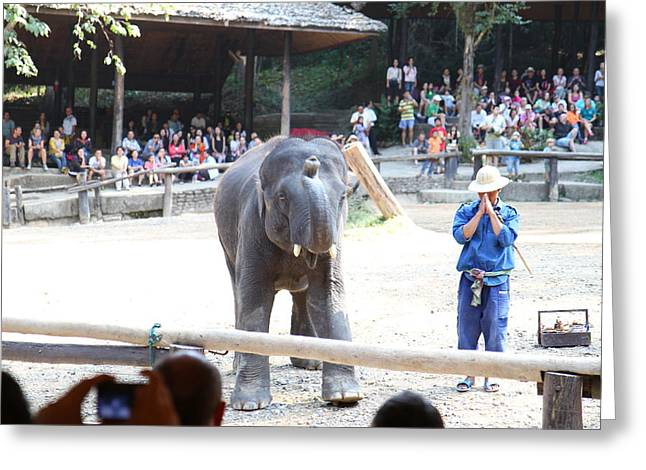 Show Greeting Cards - Elephant Show - Maesa Elephant Camp - Chiang Mai Thailand - 011349 Greeting Card by DC Photographer