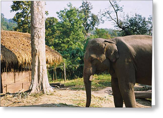 Thatch Greeting Cards - Elephant Standing Outside A Hut Greeting Card by Panoramic Images