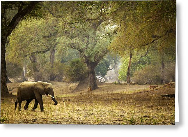Elephant Strolling In Enchanted Forest Greeting Card by Alison Buttigieg