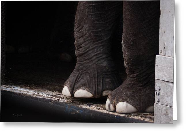 Elephant Toes Greeting Card by Bob Orsillo