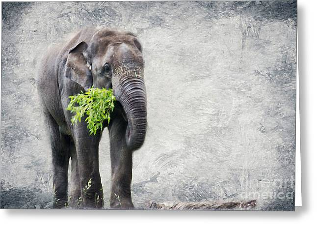 Character Portraits Greeting Cards - Elephant With A Snack Greeting Card by Tom Gari Gallery-Three-Photography