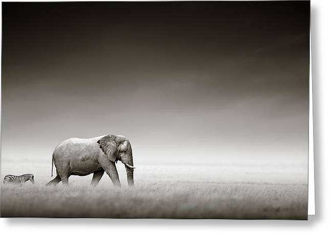 White Photographs Greeting Cards - Elephant with zebra Greeting Card by Johan Swanepoel