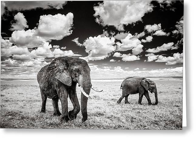 Overalls Greeting Cards - Elephants and Clouds Greeting Card by Mike Gaudaur