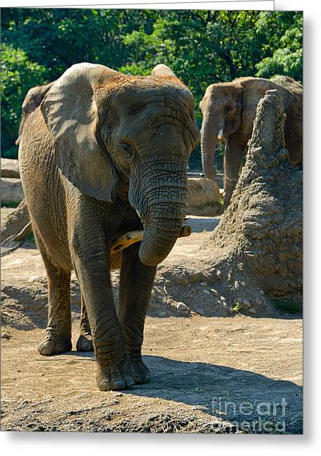 Pittsburgh Zoo Greeting Cards - Elephants at Pittsburgh Zoo Greeting Card by Amy Cicconi