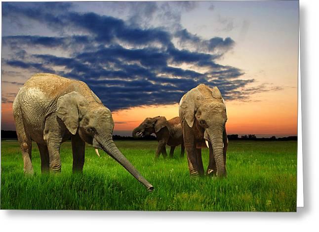 Strength Digital Art Greeting Cards - Elephants at sunset Greeting Card by Jaroslaw Grudzinski
