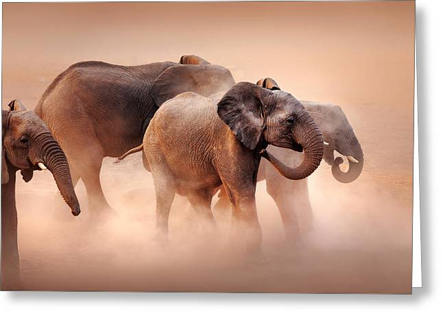 Elephants In Dust Greeting Card by Johan Swanepoel