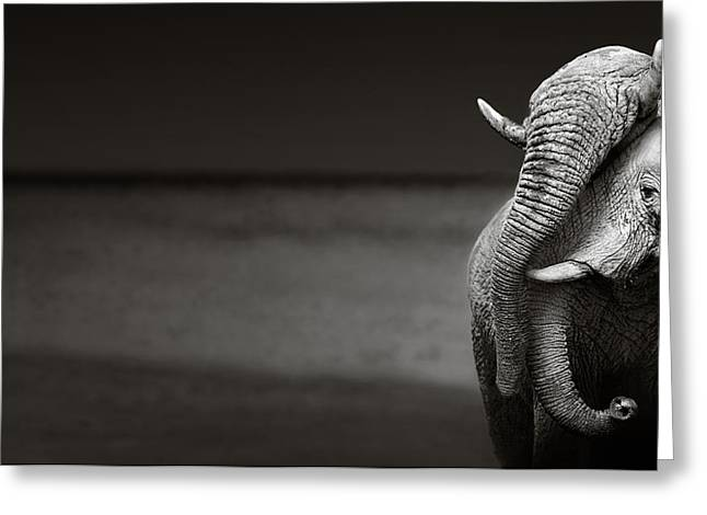 Touch Greeting Cards - Elephants interacting Greeting Card by Johan Swanepoel