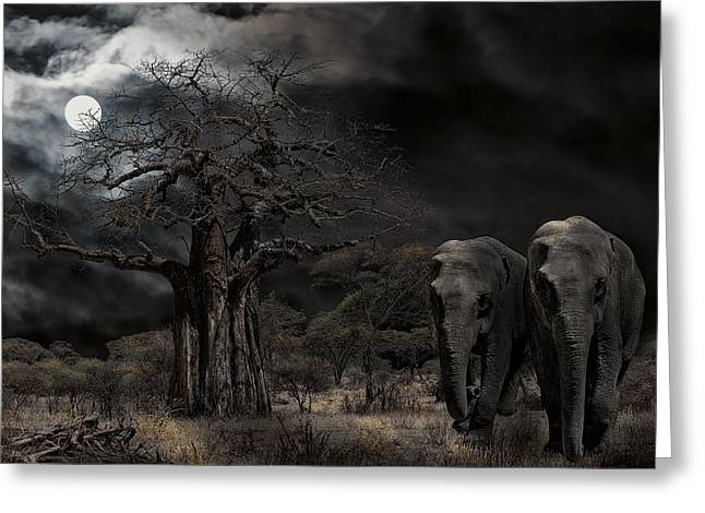 Forest At Night Greeting Cards - ELEPHANTS of the SERENGETI Greeting Card by Daniel Hagerman