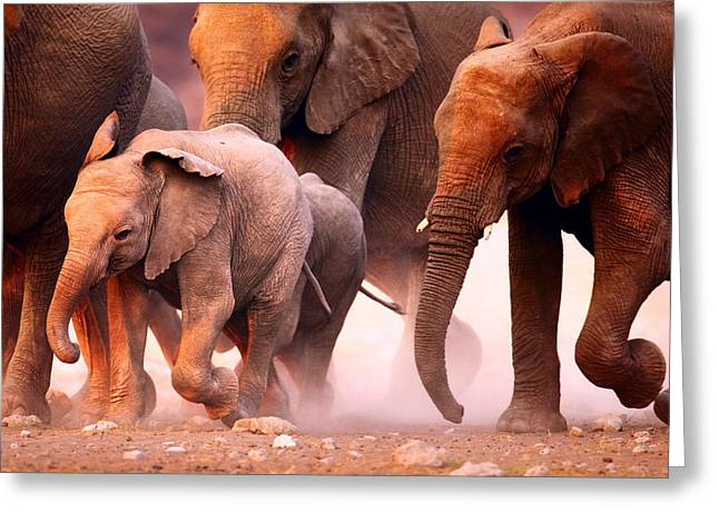 Reserve Greeting Cards - Elephants stampede Greeting Card by Johan Swanepoel