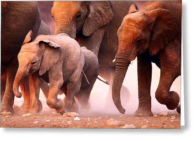 Elephants Stampede Greeting Card by Johan Swanepoel