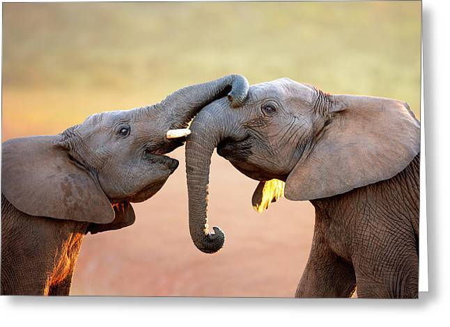 Nature Portrait Greeting Cards - Elephants touching each other Greeting Card by Johan Swanepoel