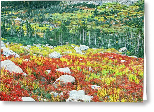 Elevated View Of Autumn Trees, North Greeting Card by Panoramic Images