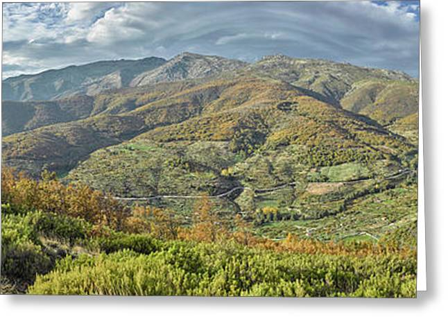 Elevated View Of Trees In A Valley Greeting Card by Panoramic Images