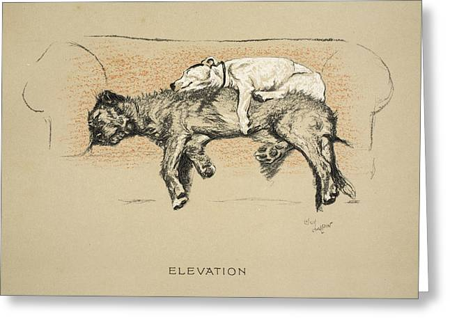 Terrier Dog Drawings Greeting Cards - Elevation, 1930, 1st Edition Greeting Card by Cecil Charles Windsor Aldin