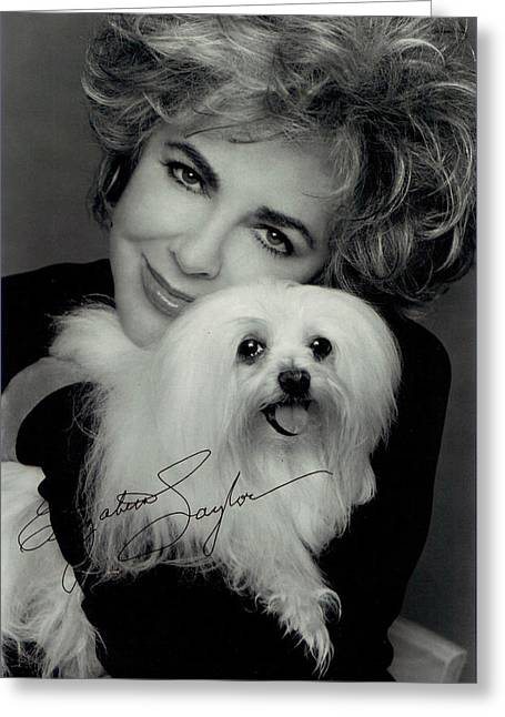 Puppies Digital Greeting Cards - Elizabeth Taylor And Friend Greeting Card by Studio Photo