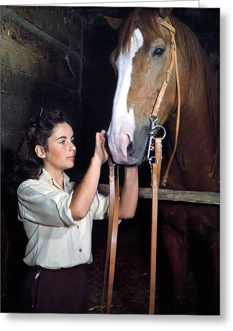 National Greeting Cards - Elizabeth Taylor in National Velvet  Greeting Card by Silver Screen