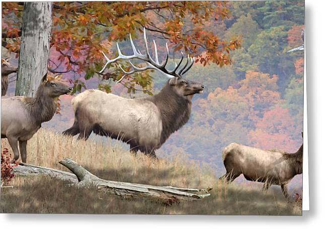 Elk Greeting Cards - Elk Art - Appalachian Monarch Greeting Card by Dale Kunkel Art