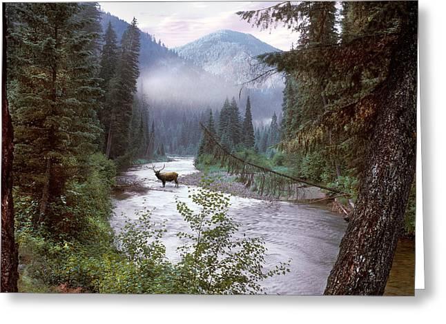 Elk Crossing 2 Greeting Card by Leland D Howard