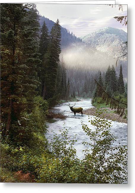 Quality Greeting Cards - Elk Crossing Greeting Card by Leland D Howard