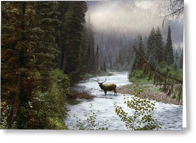 Elk Crossing Greeting Card by Leland D Howard