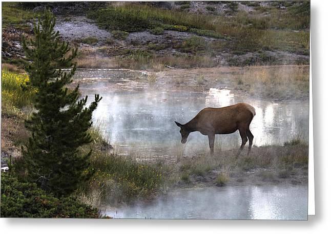 Pause Greeting Cards - Elk Dreams Greeting Card by Cynthia Bruner