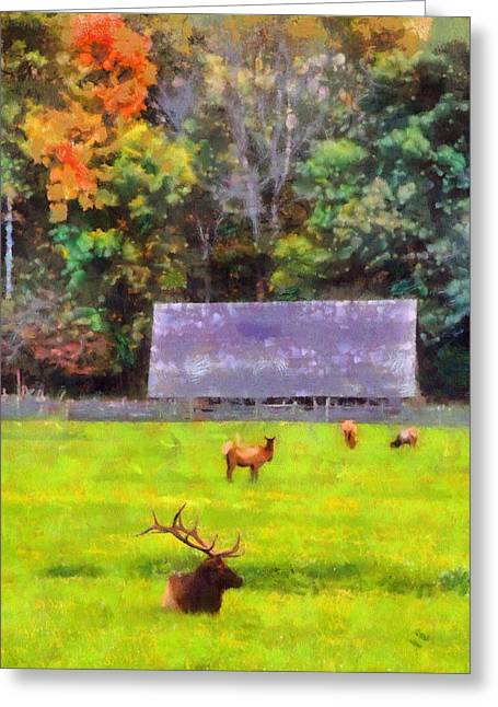 Gatlinburg Tennessee Mixed Media Greeting Cards - Elk In Cataloochee Valley Greeting Card by Dan Sproul