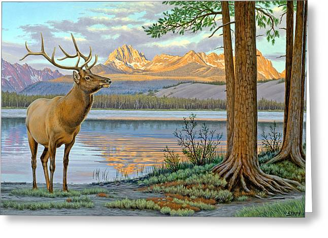 Wildlife Greeting Cards - Elk in the Sawtooths Greeting Card by Paul Krapf