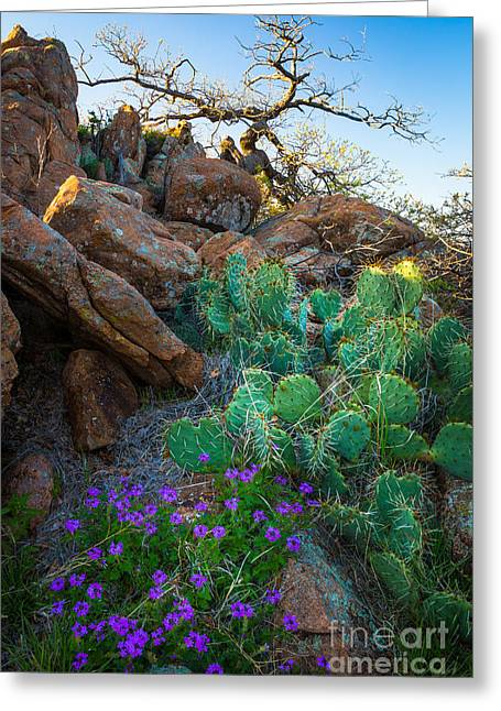 Wildlife Refuge. Greeting Cards - Elk Mountain Flowers Greeting Card by Inge Johnsson