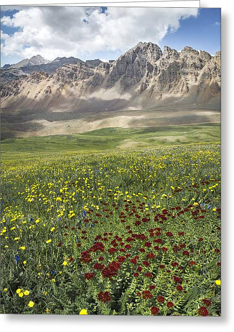 Elk Mountain Wildflowers Greeting Card by Aaron Spong