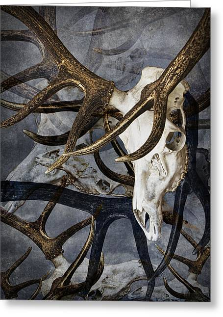 Randy Greeting Cards - Elk Skull Art Greeting Card by Randall Nyhof