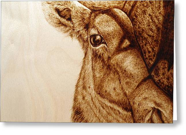 Horns Pyrography Greeting Cards - Elk Up Close Greeting Card by Cara Jordan