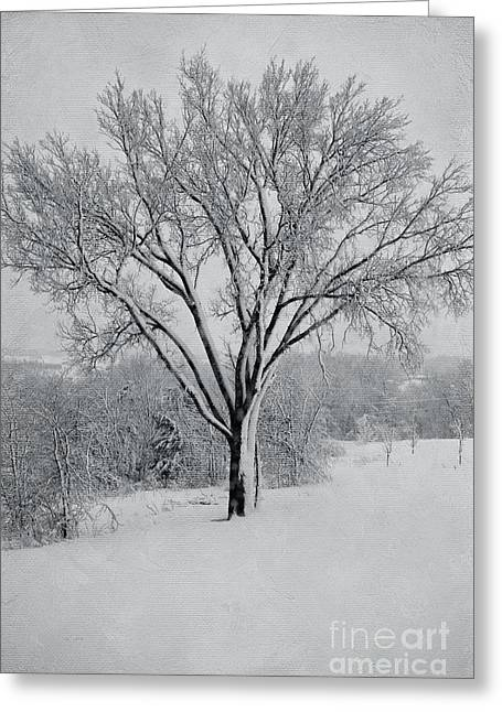 Elm Photographs Greeting Cards - Elm In Snow Greeting Card by Kay Pickens