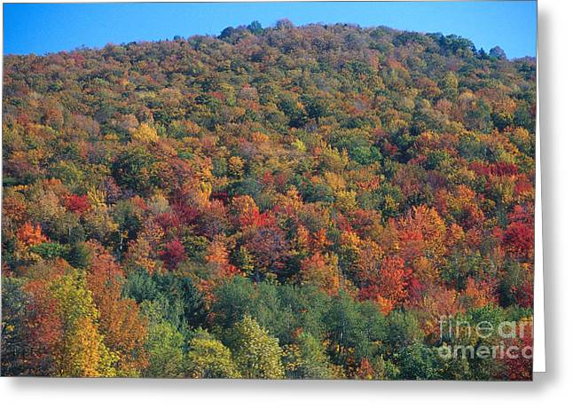 Fall Trees Greeting Cards - Elmore Mountain, Vermont Greeting Card by Gregory G. Dimijian, M.D.