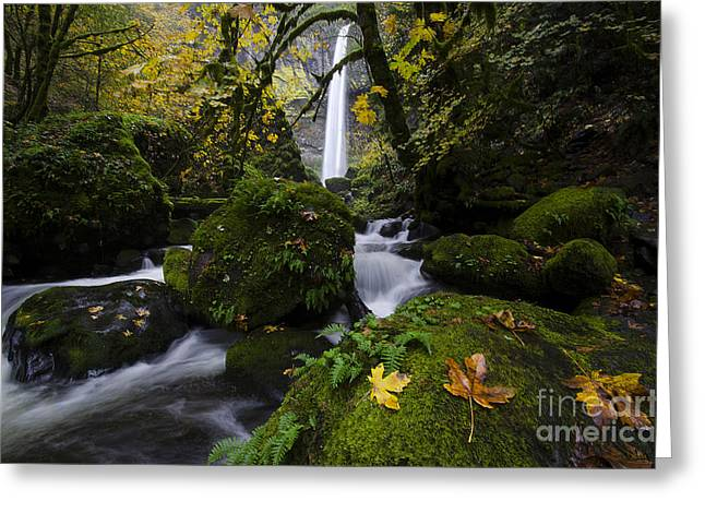 Greeting Cards - Elowah Falls Columbia River Gorge 2 Greeting Card by Bob Christopher