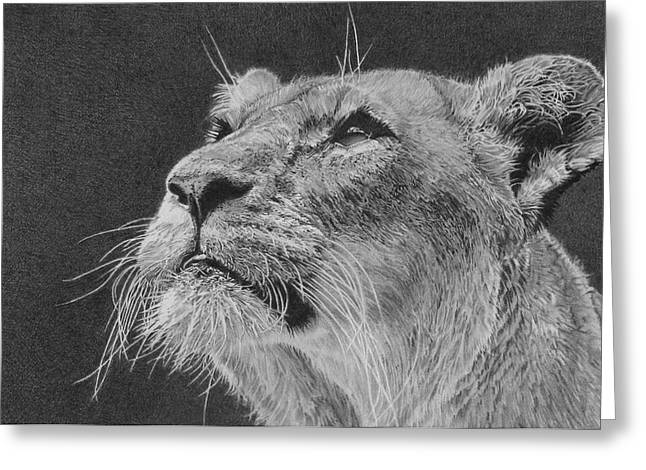Serengeti Africa Drawing Greeting Cards - Elsa Greeting Card by Kathryn Hansen