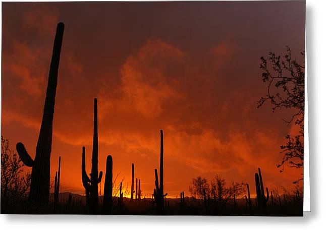 Embers Greeting Cards - Embers of the day Greeting Card by Justin  Curry